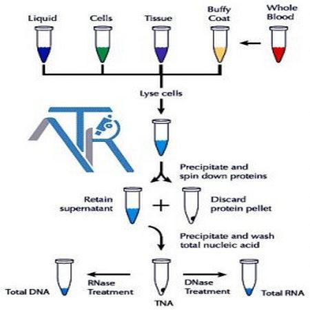 استخراج وتلخیص DNA و RNA