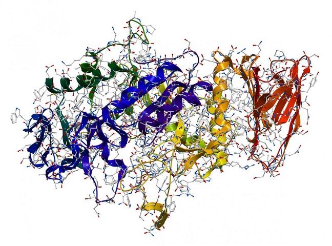 آنزیم ها