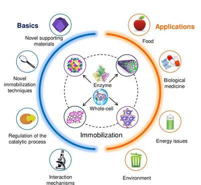 کاربرد آنزیمها در صنعت